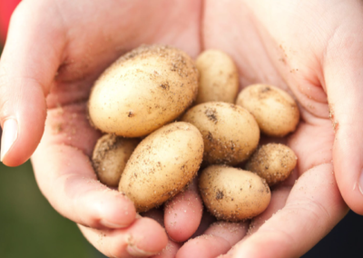 Converting potato waste into pre-biotics and other valuable products