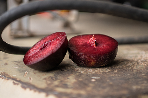 SME Solutions Centre – Maximising antioxidants in Queen Garnet plums during processing and bottling