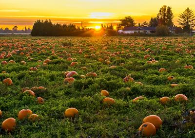 SME Solutions Centre – Value adding to underutilised/waste pumpkin produce
