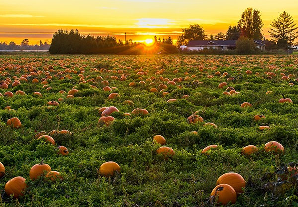 SME Solutions Centre – Value adding to underutilised/waste pumpkin produce